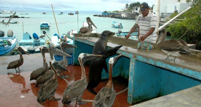 AskariTravel_Galapagos_2