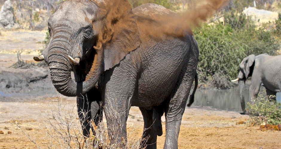 19 – Imvelo Safari Lodges – Bomani Tented Lodge – Elephant dust bathing at Mpisini Pan