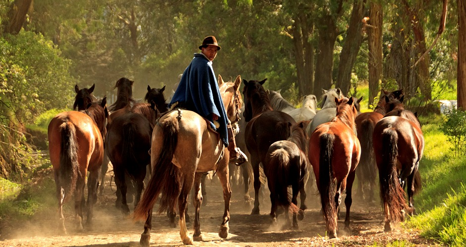 AskariTravel_SouthAmerica_Zuleta-Horses-2
