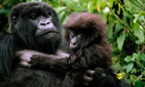 rwanda-gorillas-007